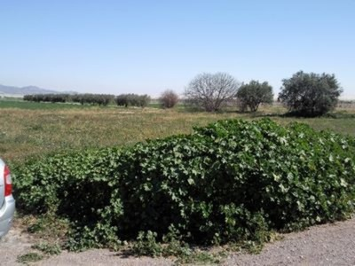 522: Land for sale in El Pareton